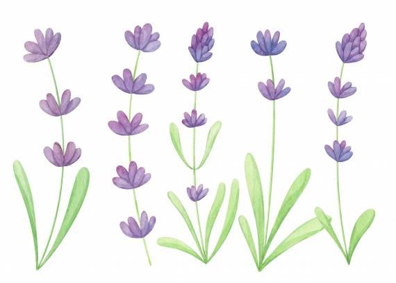 watercolor-lavender-cover.jpg