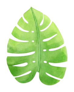 watercolor-tropical-monstera-leaf-1.png