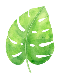watercolor-tropical-monstera-leaf-2.png