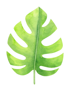 watercolor-tropical-monstera-leaf-3.png