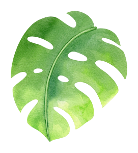 watercolor-tropical-monstera-leaf-4.png