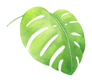 watercolor-tropical-monstera-leaf-5.png
