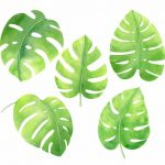 Watercolor Tropical Monstera Leaf (PNG Transparent)