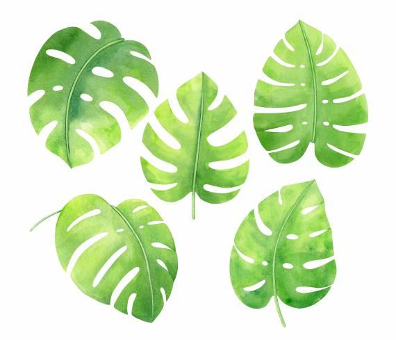 watercolor-tropical-monstera-leaf-cover.jpg