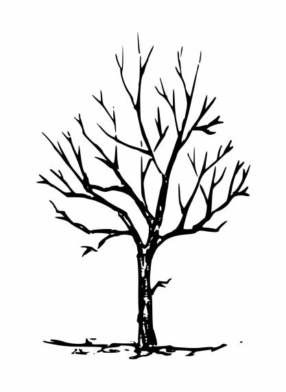 Bare Tree Drawing PNG Transparent SVG Vector