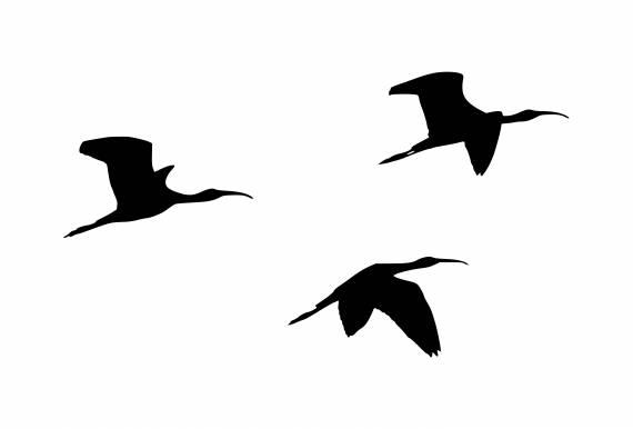 Flying Storks Flock Of Storks Silhouette PNG Transparent SVG Vector