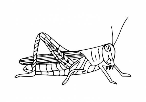 Grasshopper PNG Transparent SVG Vector