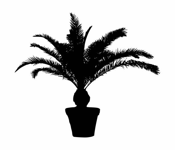 Palm Tree Pot Silhouette PNG Transparent SVG Vector