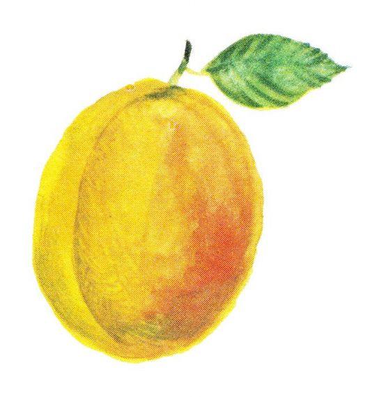 Peach Watercolor PNG Transparent