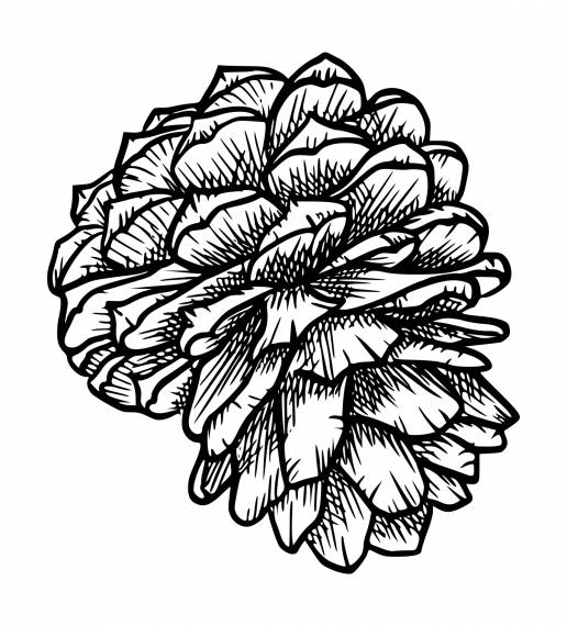 Pine Cone PNG Transparent SVG Vector