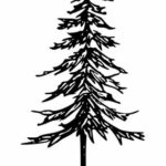 Pine Tree Drawing PNG Transparent SVG Vector