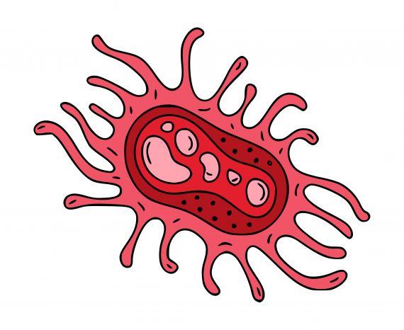 Red Cartoon Virus PNG Transparent