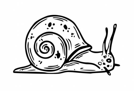 Snail PNG Transparent SVG Vector