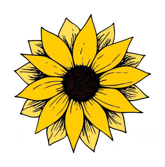 Sunflower Clipart PNG Transparent