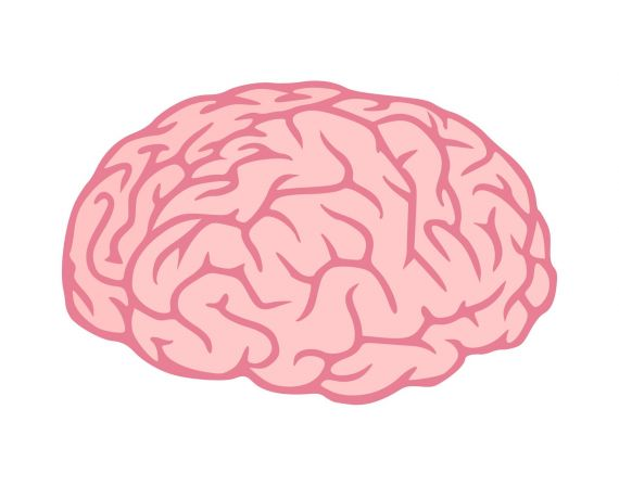 Brain Clipart PNG Transparent