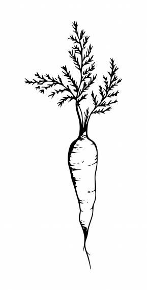 Carrot PNG Transparent SVG Vector