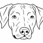 Dog Head PNG Transparent SVG Vector