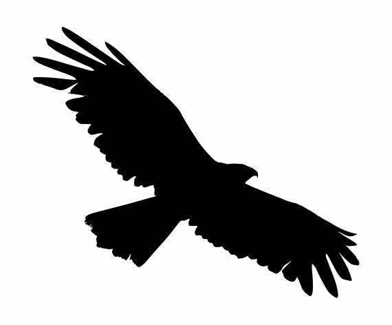Flying Eagle Silhouette PNG Transparent SVG Vector