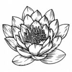 Nymphaea Nelumbo PNG Transparent SVG Vector