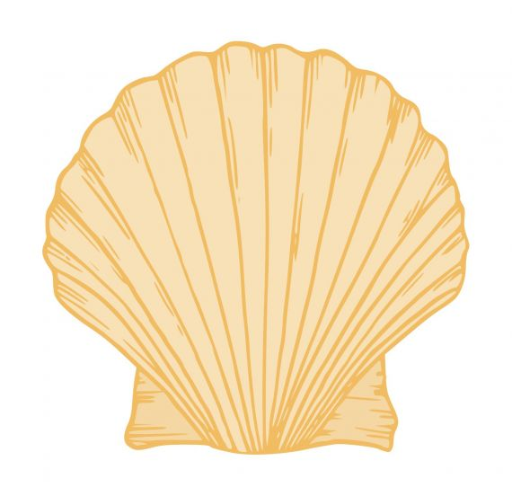 Shell Clipart PNG Transparent