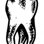 Tooth Drawing PNG Transparent SVG Vector