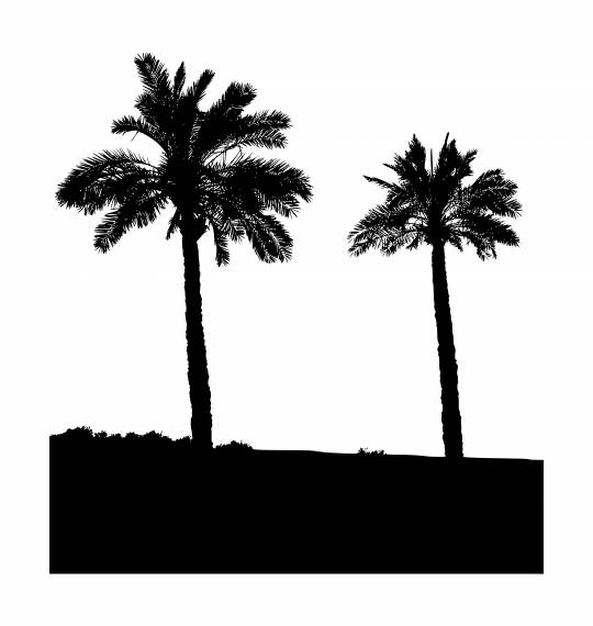 Two Palm Tree Silhouette PNG Transparent SVG Vector